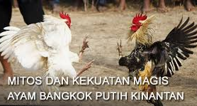bandar ayam bangkok